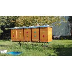 Prodej medu- Pavel Hovorka- Libel- okres Rychnov nad Kněžnou