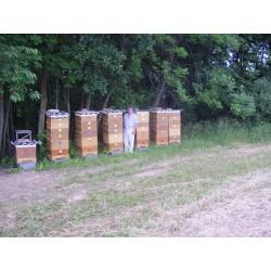 Prodej medu Jaroslav Facek- Libina- okres Šumperk