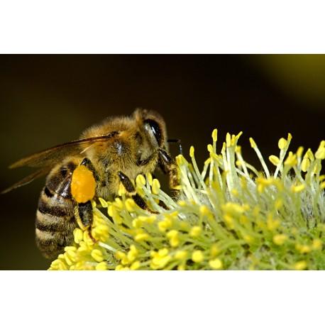 Prodej medu- Pavel Schneider- Bubovice- okres Beroun