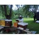 Prodej medu Milan Houska- Praha 4- Háje