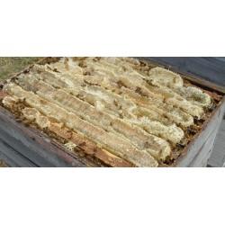 Prodej medu- Včelí farma Kadlecovi- České Budějovice