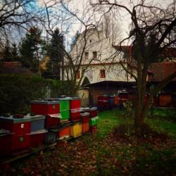 Prodej medu Václav Bunc- Praha 12 – Kamýk