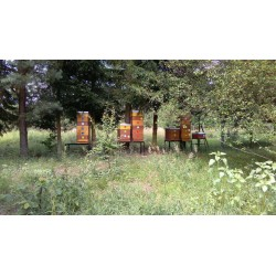 Prodej medu Šárka Štěpničková- Božičany- okres Karlovy Vary