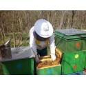 Prodej medu Radek Padrta- Plaveč- okres Znojmo