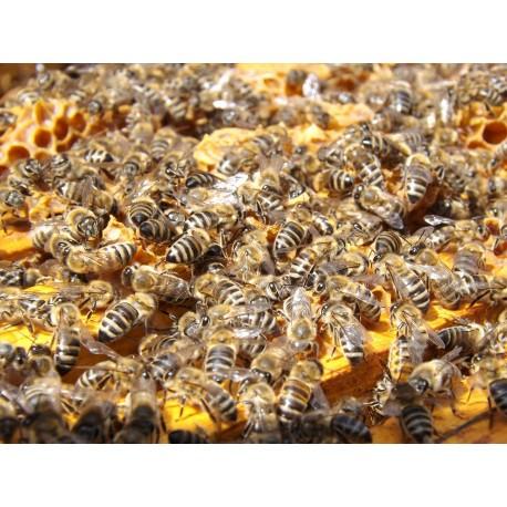 Prodej medu Mirka Kubešová- Kostelec nad Vltavou- okres Písek