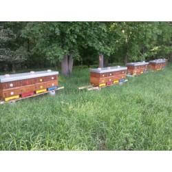 Prodej medu Michal Toman- Mšené lázně- okres Litoměřice