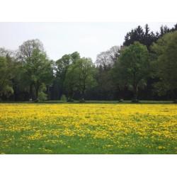 Prodej medu Tomáš Hanuš- Přibyslav- okres Havlíčkův Brod