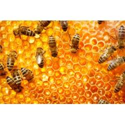 Prodej medu- Jiří Kmet- okres Břeclav