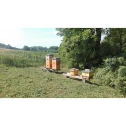 Prodej medu Jan Abík- Měšice- okres Praha-východ