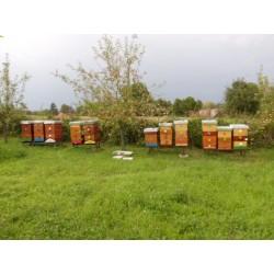 Prodej medu Jaromír Mareček- Jaroměř-Josefov- okres Náchod