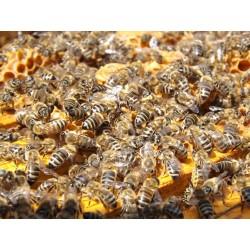 Prodej medu Štěpán Ryba- Včelná- okres České Budějovice