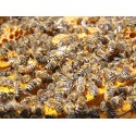 Prodej medu Rudolf Harušták- Podlešín- okres Kladno