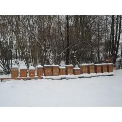 Prodej medu Václav Pospíchal- Ostrava Svinov
