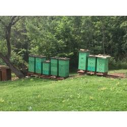 Prodej medu- René Hruboš- okres Uherské Hradiště