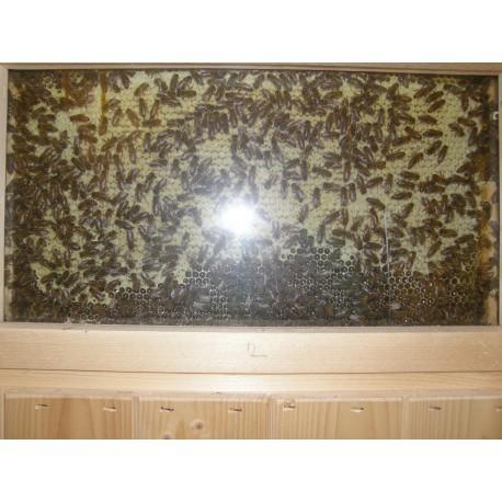 Prodej medu- Václav Jůn- okres Prachatice