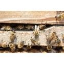 Prodej medu Petr Mach- Praha 6