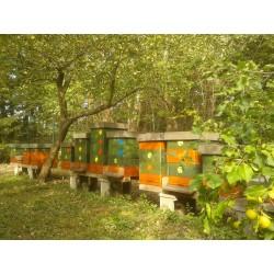 Prodej medu Martin Štol- Chodov- Praha-východ