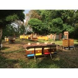 Prodej medu Martin Polončík- Žatec- okres Louny