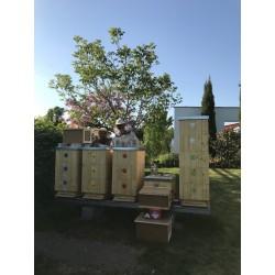 Prodej medu Jindřich Kolařík- Frýdek-Místek