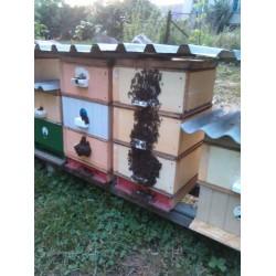 Prodej medu Milan Ostrý- Nová Ves- okres České Budějovice