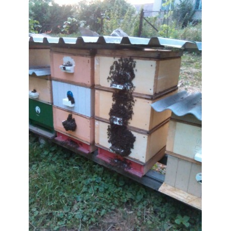 Prodej medu- Milan Ostrý- okres České Budějovice