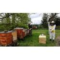 Prodej medu Jan Förster- Humpolec- okres Pelhřimov