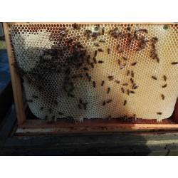Prodej medu Jan Kaloč- Malenovice- okres Frýdek-Místek