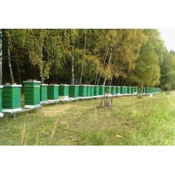 Prodej medu- Pavel Mach- okres Plzeň město