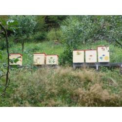 Prodej medu Tomáš Klein- Nový Malín- okres Šumperk