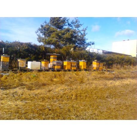 Prodej medu- Otakar Šimůnek- okres Benešov