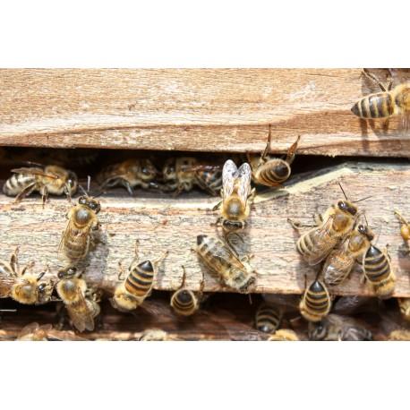 Prodej medu Jan Moučka- Novosedly nad Nežárkou- okres Jindřichův Hradec
