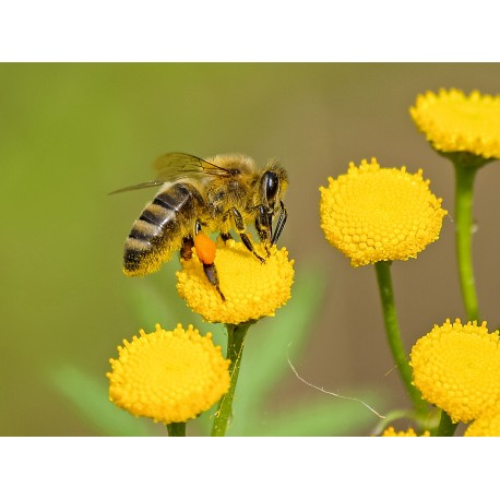 Prodej medu Iva Němcová- Vysoké Mýto - okres Ústí nad Orlicí