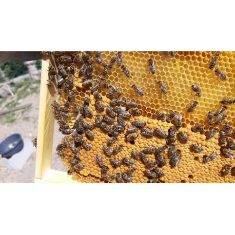 Prodej medu Miroslav Švec- Kraslice- okres Sokolov