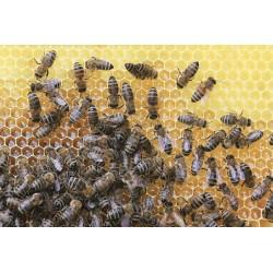 Prodej medu Vratislav Satrapa- Leština u Světlé- okres Havlíčkův Brod