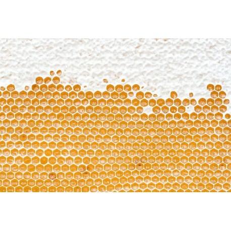 Prodej medu Martin Vaněk- Benešov