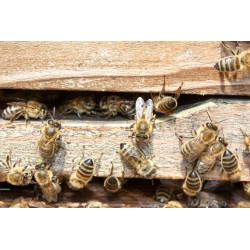 Prodej medu Václav Rybář- Nový Bor- okres Česká Lípa