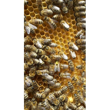 Prodej medu Petr Brablík- Boleradice- okres Břeclav