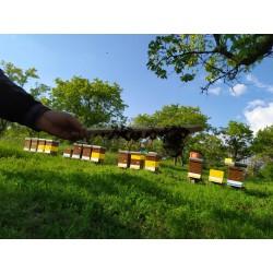 Prodej medu Radek Kovář- Nikolčice- okres Břeclav