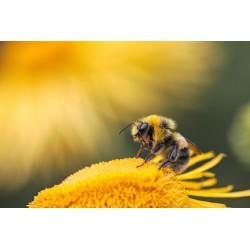 Prodej medu Břetislav Sobek- Bystřice pod Hostýnem- okres