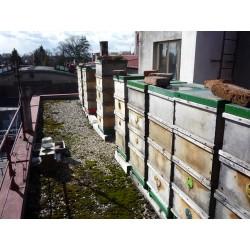 Včelařství Povondrová + Bílý- okres Praha