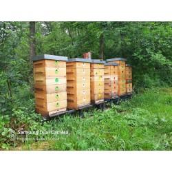 Prodej medu Radomír Pavek- Třešť- okres Jihlava