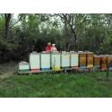 Prodej medu Petr Švanda- Vlčnov- okres Uherské Hradiště