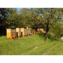 Prodej medu Antonín Kučera- Jesenec- okres Prostějov