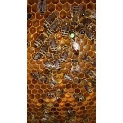 Prodej medu Zdena Millerová- Jesenný- okres Semily