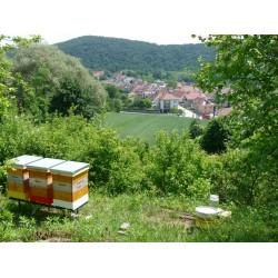 Prodej medu- Jiří Rozehnal- okres Brno-město