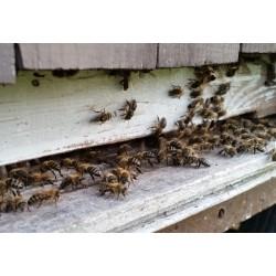 Prodej medu-Milan Drbálek- Pozďatín- okres Třebíč