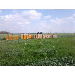 Prodej medu- Včelařství Tupadly- okres Kutná Hora