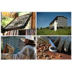 Prodej medu- Jaroslav Buchtel- okres Pardubice