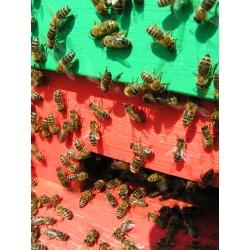 Prodej medu- Eva a Václav Jirkovi- okres Náchod