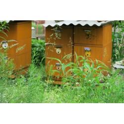 Prodej medu- Miroslav Sláma- okres Domažlice